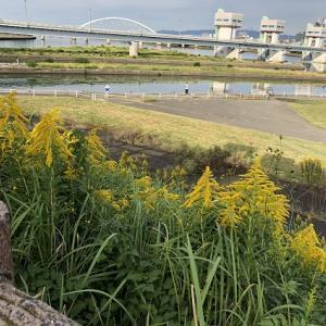久しぶりに自転車で淀川河川敷へ