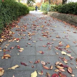 紅葉の季節は足早に過ぎ行く