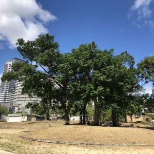 木の復元力に感嘆