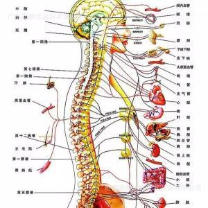 脊椎調整で運動機能をUP。。。
