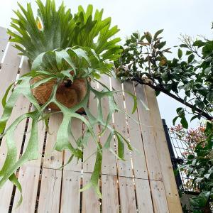 すのこ板で簡単ウッドフェンスDIY!植物を吊るそう!