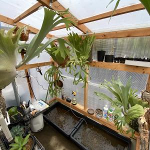 温室でメダカを飼育し始めました。