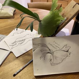 ビカクシダの絵を描いています。