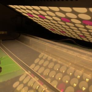 【1200W!?】植物育成LEDをAmazonで買ってみたぞ!