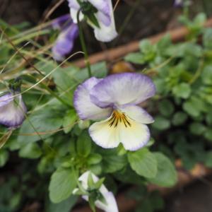 12月の庭