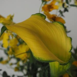 フラワーデザイン 黄色い花束