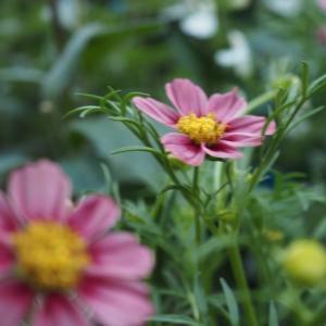 9月の庭 vol.1 秋の花といえば・・・