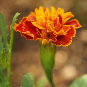 9月の庭 vol.2  秋色の花を選んで