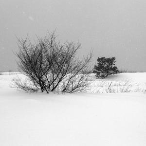 雪の情景 - Part.1 -