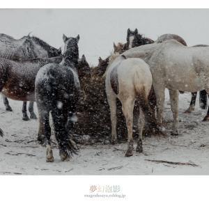 雪の情景 - Part.9 -