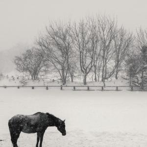 雪の情景 - Part.11 -