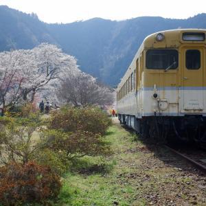天国にいちばん近い里 川角からの~桜巡り