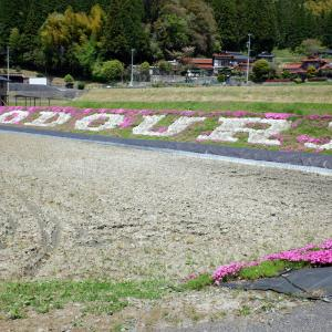 大道理の芝桜・・は見学自粛中