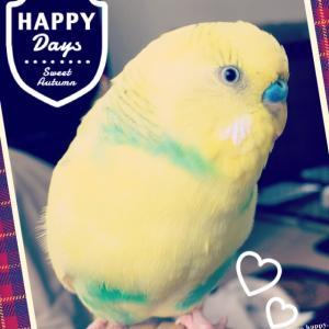 Happy    X'mas☆