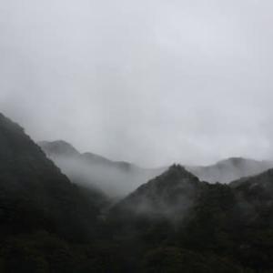 山桜の散る峪で[風を釣る日々<50>]