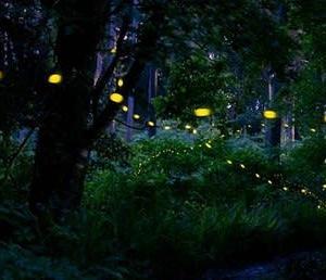 森のホタルが飛び交う夜に[友愛の森/里山再生プロジェクト<100>]