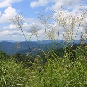 秋の森へ「秋の森の草木染め」「自然布を織る」/本日、諸塚村桂地区へ