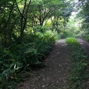 森を歩き、野草茶の素材を採集する[森へ行く道<77]
