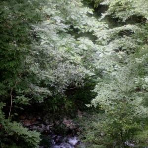 大岩とともに谷底へと落下すること[九州脊梁山地:ヤマメ幻釣譚<93〉]