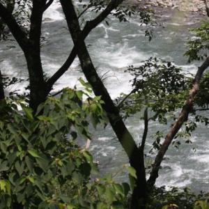 「川流れ」の夏/雷鳴の谷で夏ヤマメを追った二日間③[九州脊梁山地:ヤマメ幻釣譚<96〉]