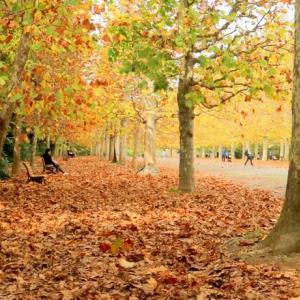 「秋の歌(Chanson d'automne)」(再)