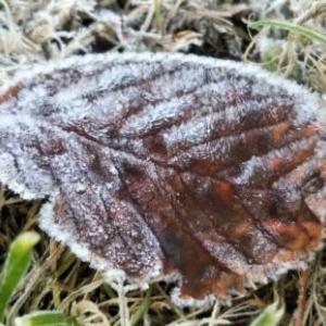 心あてに 折らばや折らむ 初霜の おきまどはせる 白菊の花