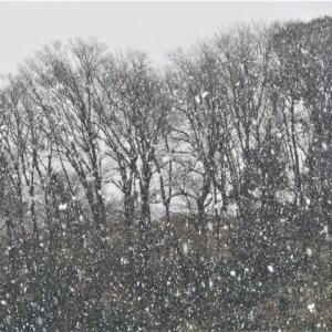 一時的に雪が舞ったけど・・、