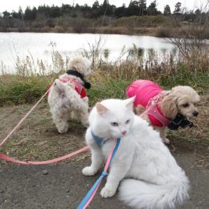 猫と犬の散歩