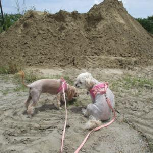 白犬に引かれて砂利置き場
