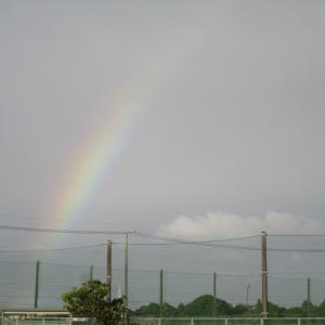 昨日の虹と今日の猫