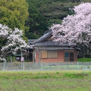 桜とともに 其の5