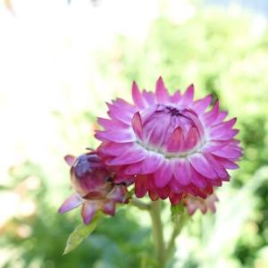 我家の庭の花