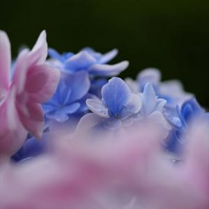 母の日の花たち