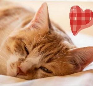 """かなり質の良い睡眠だったかも ♥ と感じる """" 時 """""""