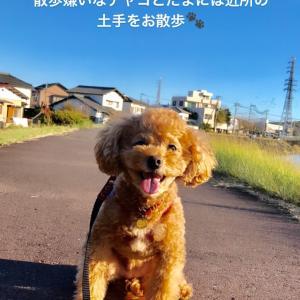 タコパと散歩