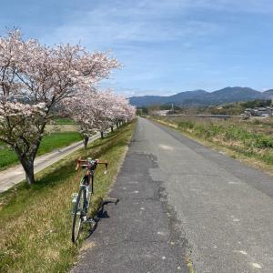 デローザで鮎河千本桜🌸木通開花