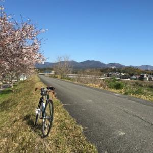 デローザで鮎河千本桜〜琵琶湖🌸お花見サイクリング