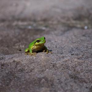 井の中の蛙~冒険者として生きる~