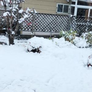 冬到来!大雪注意!
