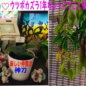 春うらら 気分転換(*^_^*)