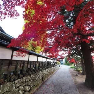 長円寺のモミジ