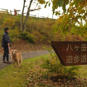 八ヶ岳自然文化園の紅葉
