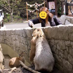 伊豆シャボテン動物公園①〜カピバラの露天風呂〜