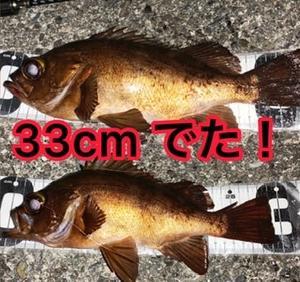釣りたいですか!?×33cm ×でかメバル(゚A゚;)