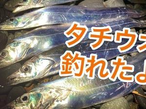 タチウオ×かいまく(*´▽`*)×2020年