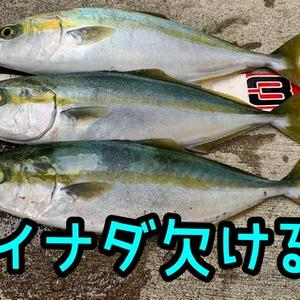 イナダ欠け3本×まだチャンス❗️×青物(*≧∀≦*)