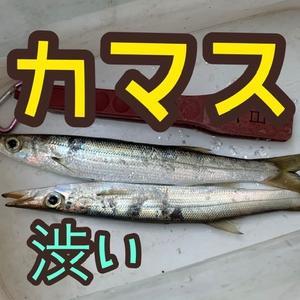 2本GET❗️×カマス×ライトゲーム(*´ω`*)