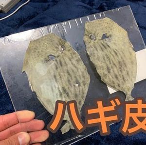 自作サビキ×魚皮コレクション×ハギ皮( *´艸`)