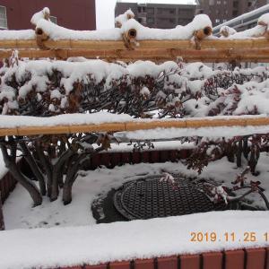 191125 湿り雪