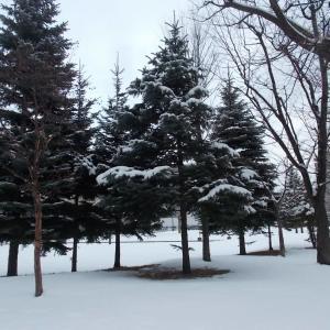 200120 湿り雪